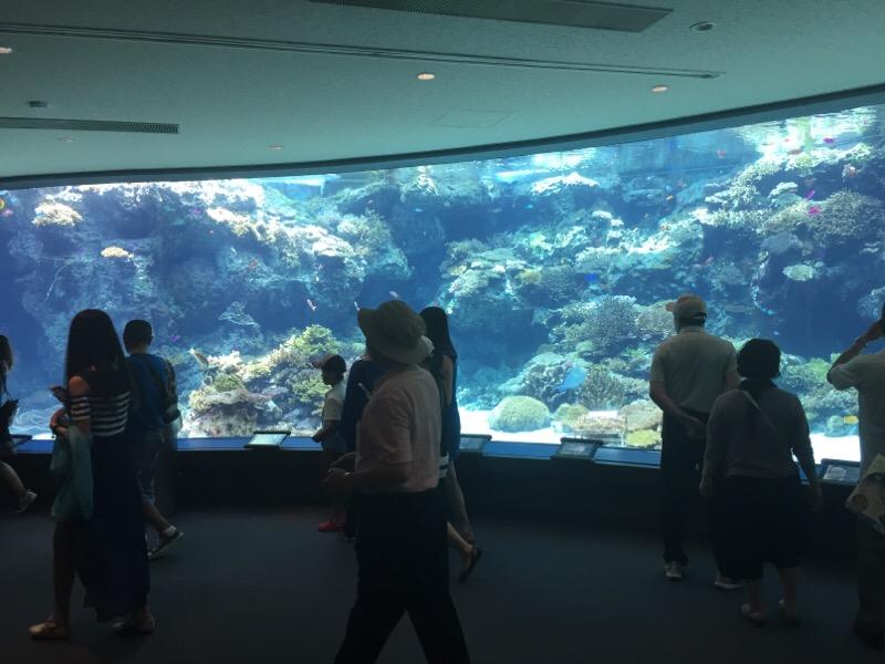 美ら海水族館(その4)