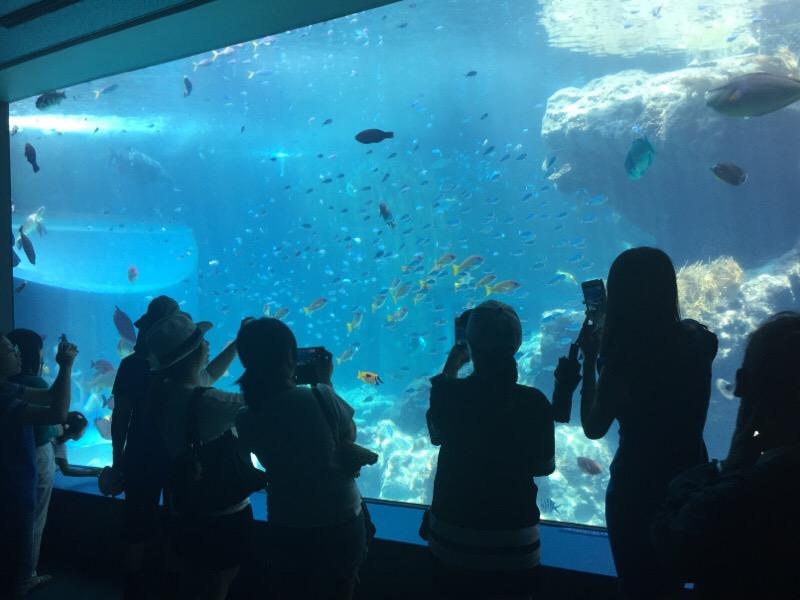 美ら海水族館(その6)