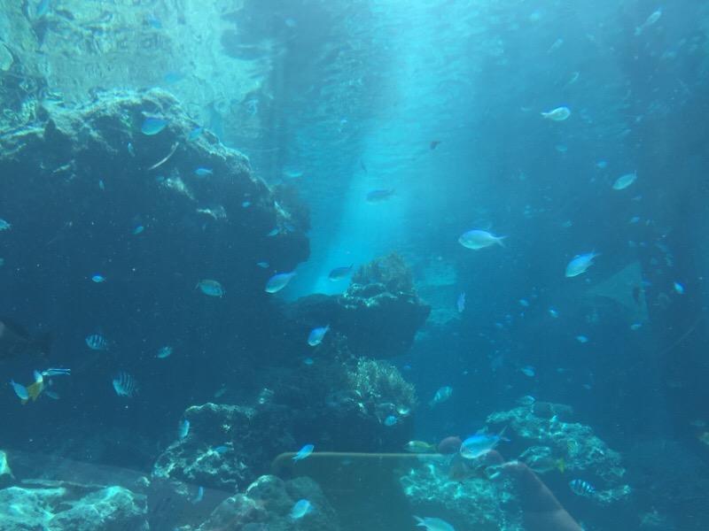 美ら海水族館(その8)