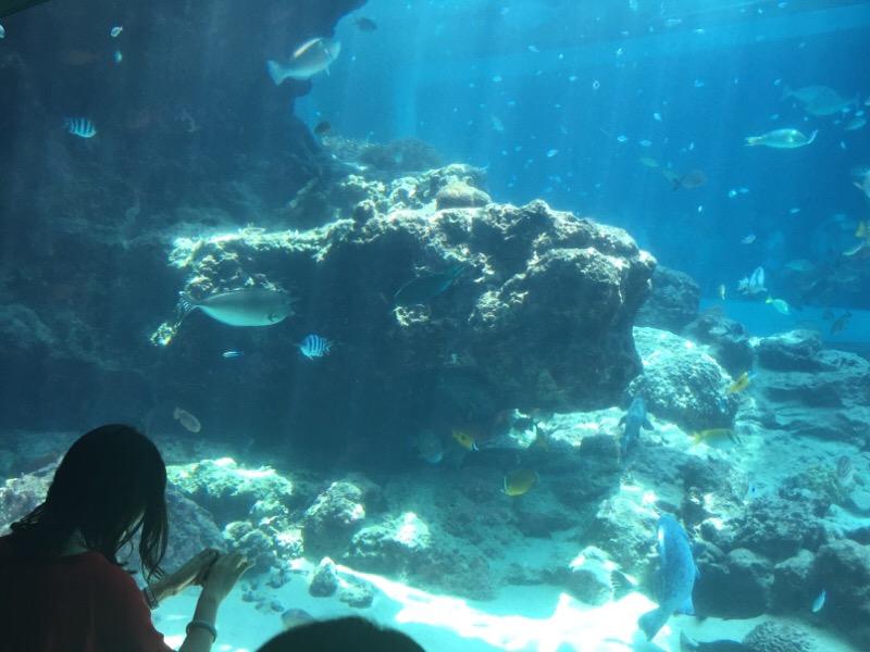 美ら海水族館(その9)
