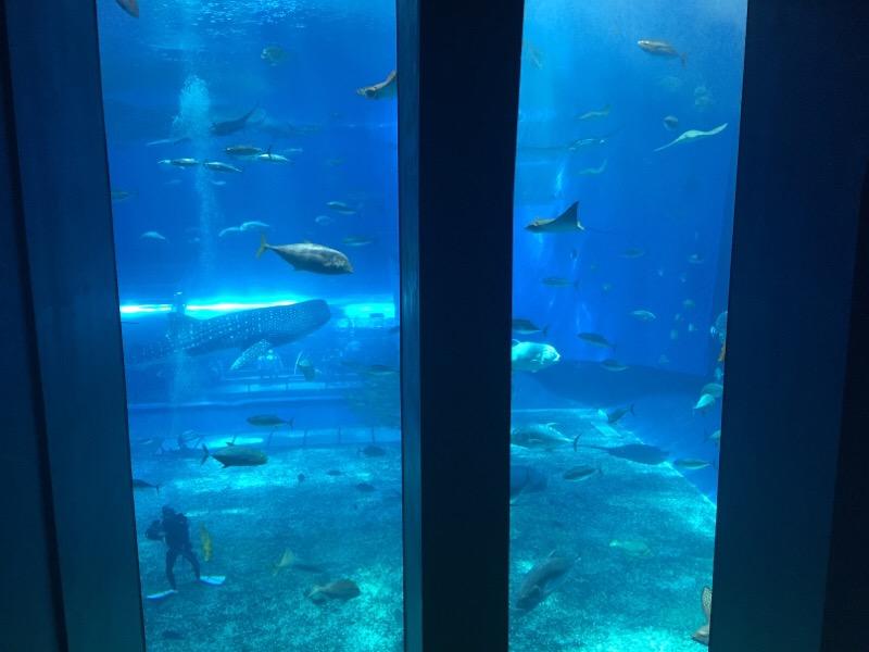美ら海水族館(その18)