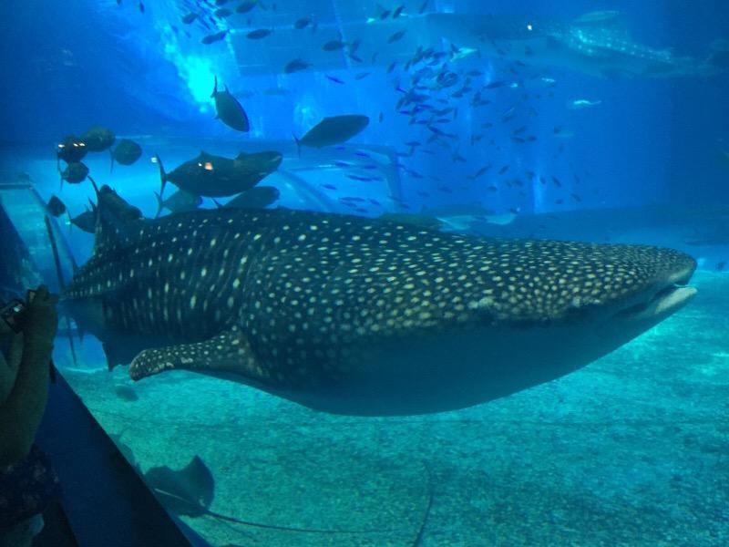 美ら海水族館(その25)